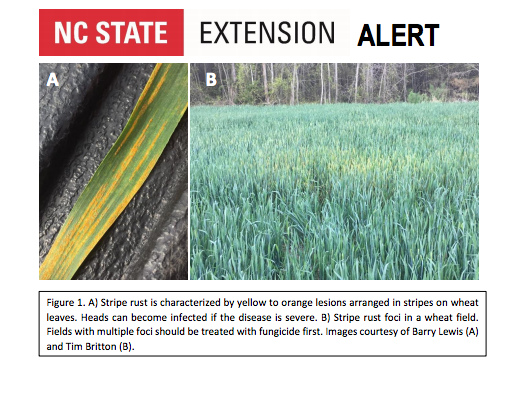 NC Stripe Rust Alert April 2018