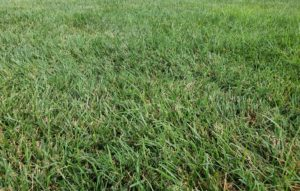 Cover photo for Turfgrass Tips & August 2nd Successful Gardener Meeting