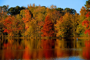 trees in fall foliage