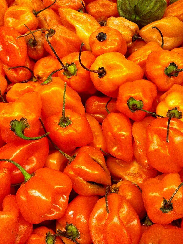 Image of Habanero Peppers