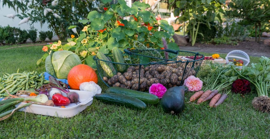 Fall Produce in basket photo credit pixabay