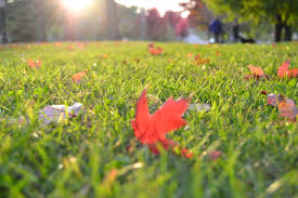fall leaves on grass lawn
