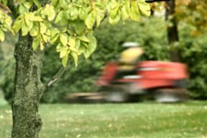 lawnmower landscaping around trees