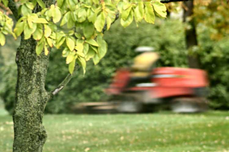 lawnmower landscaping around trees
