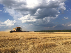 harvesting wheat field in union county
