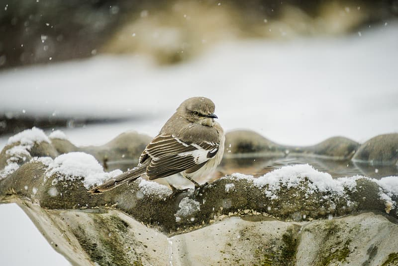 Bird in birdbath with snow