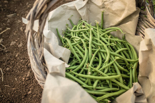 Basket with green beans