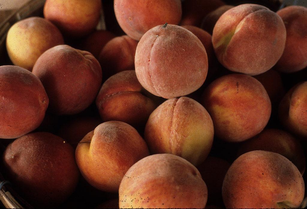 Bushel of Peaches