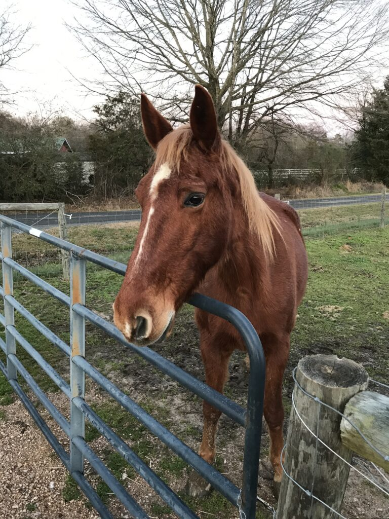 Horse standing in front of fence