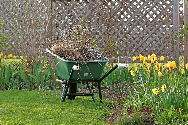 A wheelbarrow in the garden filled with branches and weeds.