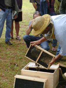 Beekeeper Installing Packaged Bees