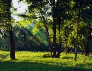 SunLight Shining Through Trees in a Field