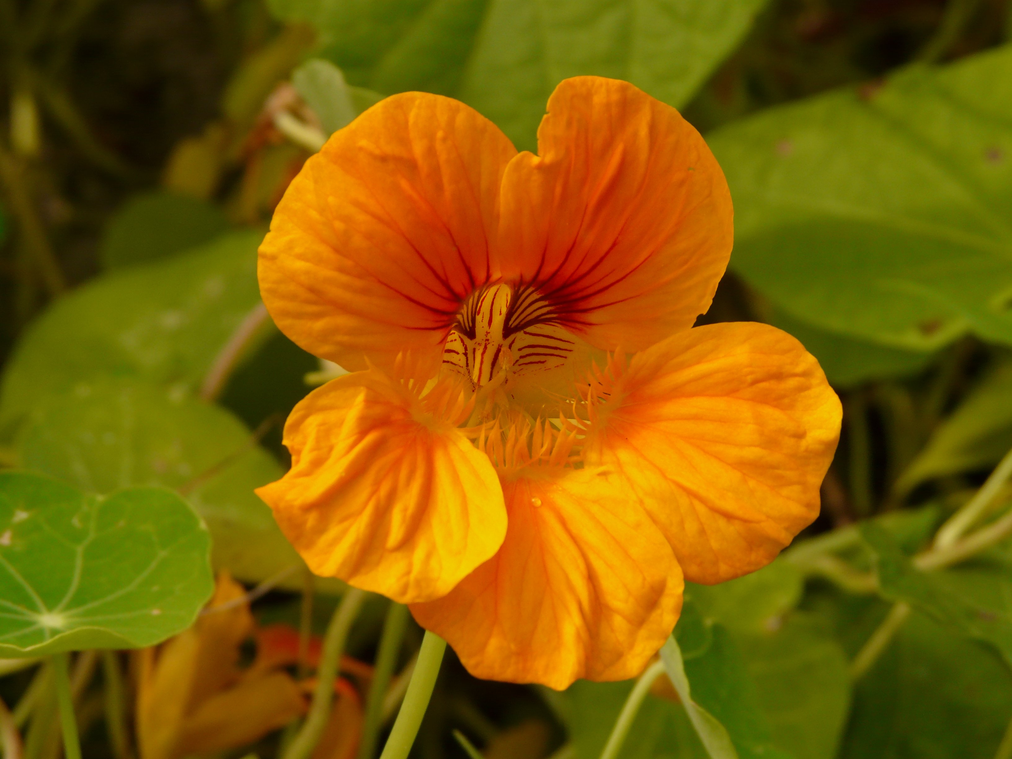 Yellow/Orange Flower with Green Leaves