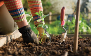 Person planting a plant in soil